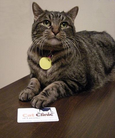 Кот с подарком фото