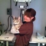 Got Cat Skills?